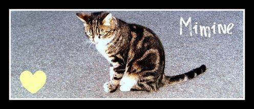 Un chien, un chat, c'est un coeur avec du poil autour. <3