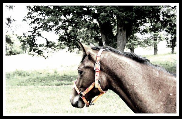 Votre cheval vous ressemble comme votre reflet dans un miroir. <3