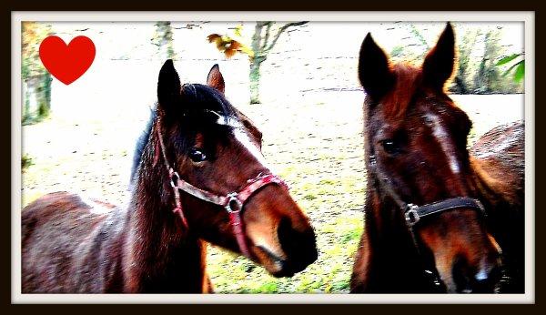Apprenez à écouter ce que votre cheval murmure à votre oreille. <3