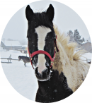 Photo de Beautiful-painthorse