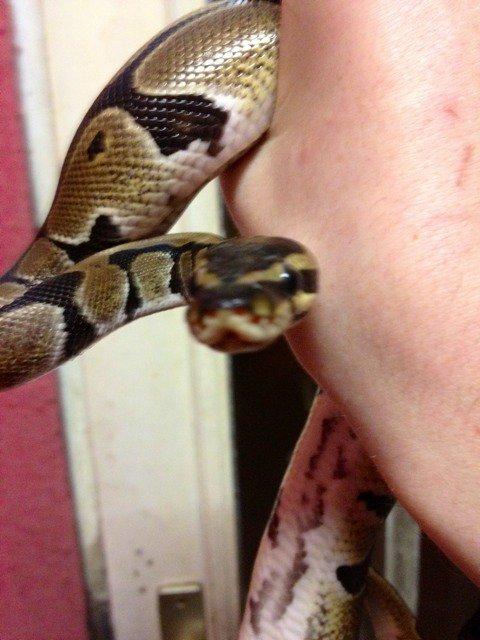 mon pauvre serpent