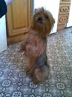 mes chien de garde