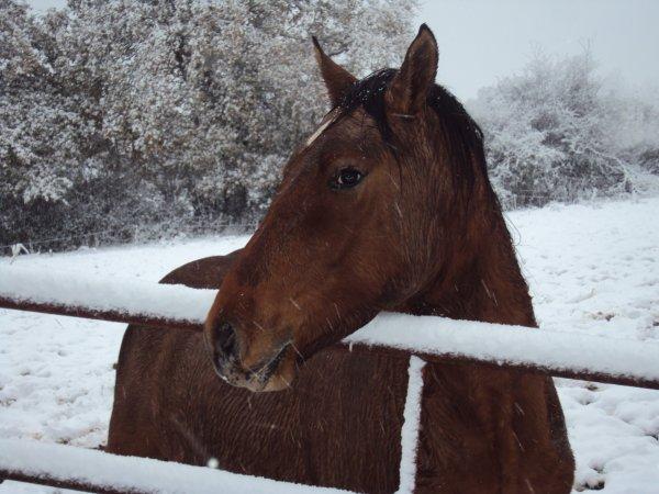 des  petits moment en neige