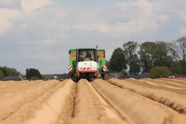 Plantation de pommes de terre chantier N°2
