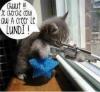 Mon chat du lundi chui comme lui
