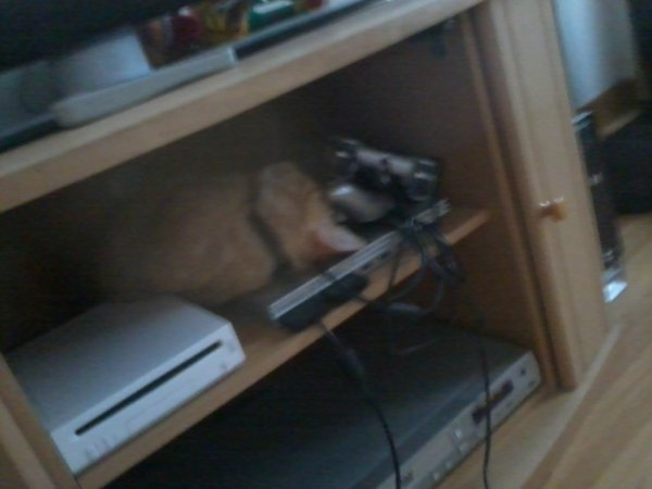 Un chat se cache dans les game boy