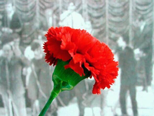 Fleure Oeillet En Portugais Idee D Image De Fleur