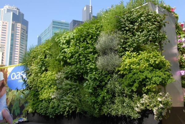 Living Wall Garden ...