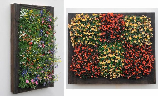 andrewchang19s articles tagged succulent living wall