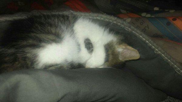 Mon petit bebe chaton