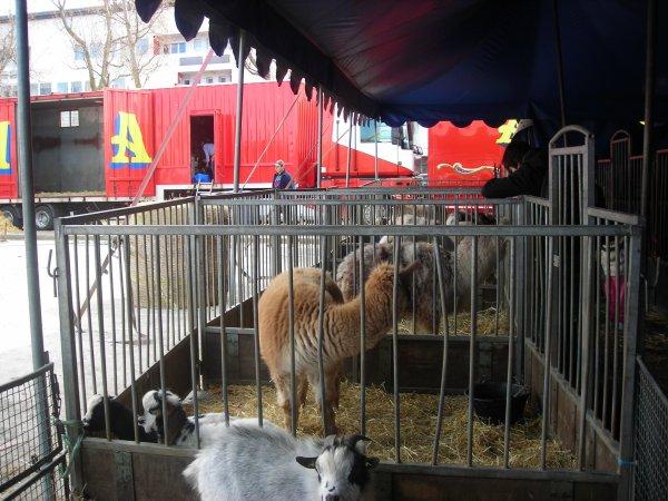 AMAR FALCK CALAIS  2012 zoo