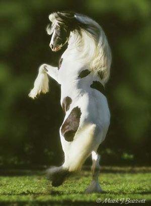 Un magnifique cheval!