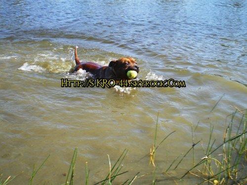 Journée à l'étang