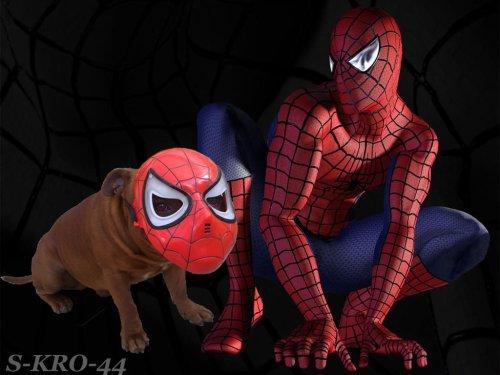 Spider-Bomber