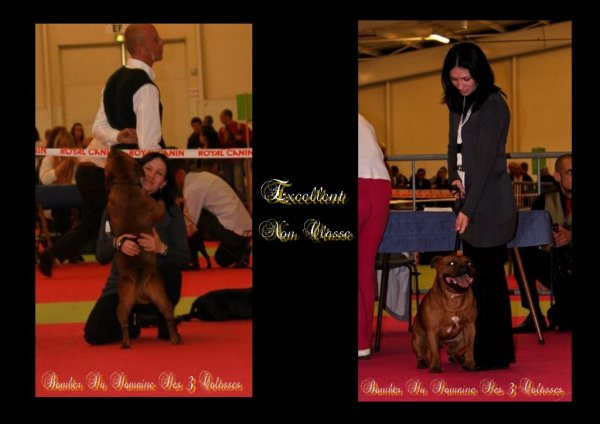 Bomber sur le ring à la Nationale D'élevage à Orléans