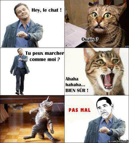 Hey le chat !