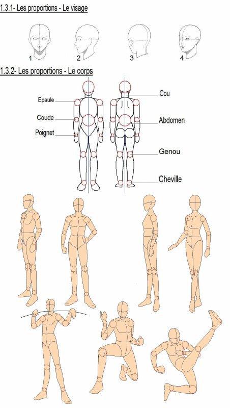 les base du corps manga
