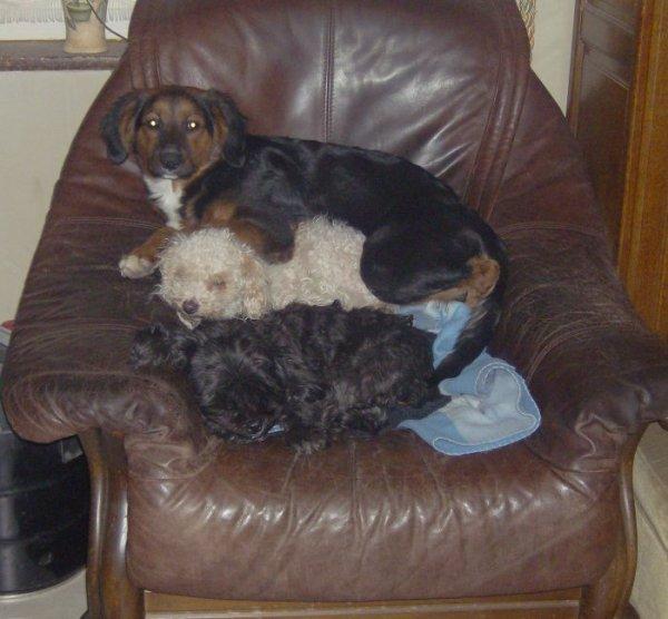 voila mes chiennes cléo,princesse et véga ^^