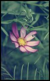Photo de x-book-photographie