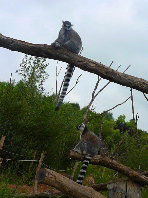 Parc animalier de Sainte-Croix, Rhodes 1