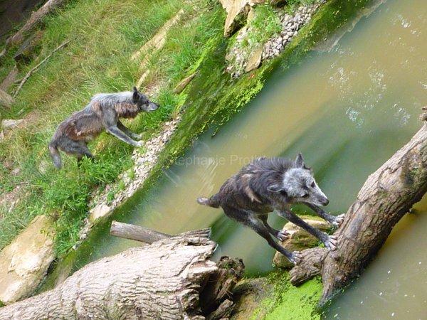 Parc animalier de Sainte-Croix, Rhodes 2