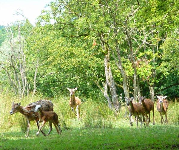 Parc animalier de Sainte-Croix, Rhodes 3