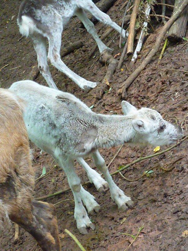 Parc animalier de Sainte-Croix, Rhodes 4