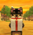 Photo de Nintendogs--and--Cats