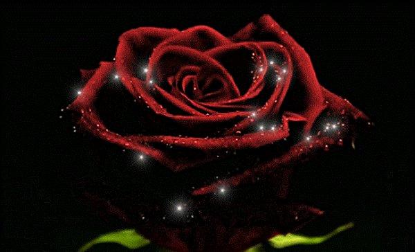 Chaque fleur possède un parfum divers,  intense, légé ou extraordinaire.  Chaqu'une d'elle révèle en nous une sensation différente,  et parfois meme répétitive,  sans pourtant qu'elle ne soit agaçante.  Ainsi chaque poème possède un parfum divers,  intense , légé ou extraordinaire.  Chaqu'un d'eux possède une personnalité,  articulé par votre lecture passionnée.