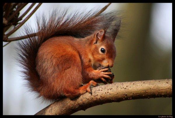 kidnappé un écureil et demander une ranon a la caisse d'épargne lol