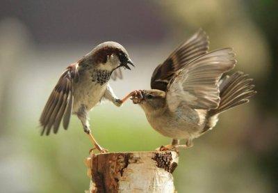 Prenons exemple sur la nature..................