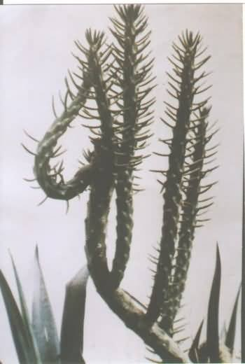 A Plant Fashions itself to Display the Name of Allah