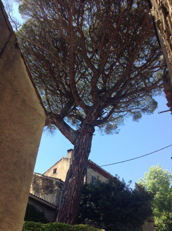 L'arbre, notre symbole