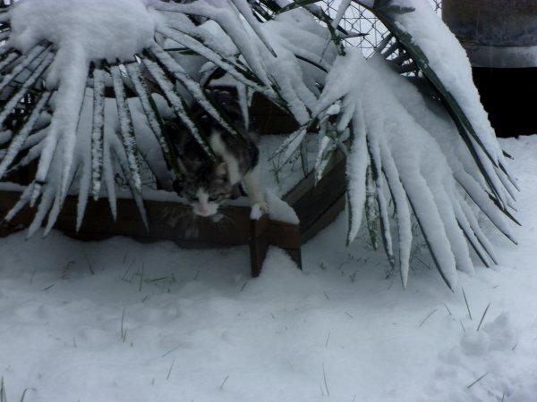les jours se suivent sans se ressembler , hier, découverte de la neige pour mes deux loulous, Doug ( 10 ans en mai prochain) et Justin le rescapé de la noyade de 2016