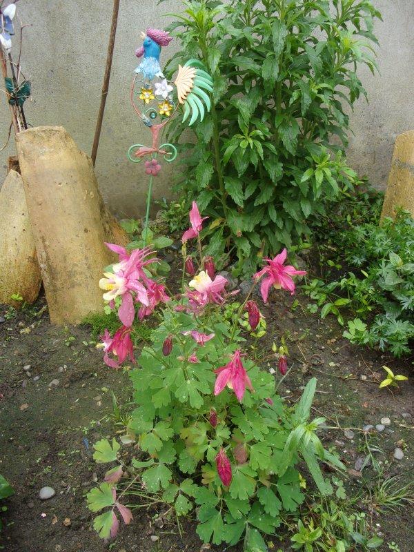 du rose, du jaune , tout plein de couleurs dans le jardin