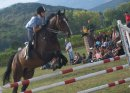 Photo de horse-68