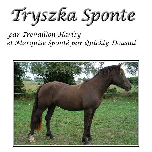 Tryszka Sponté