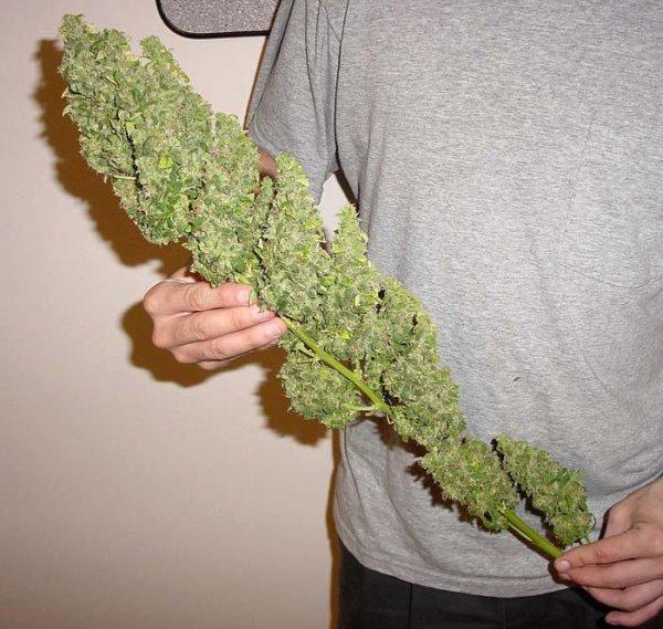 Smoke WEED (l) (l)