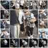 24.04 – Justin quittant l'aéroport LAX, Californie