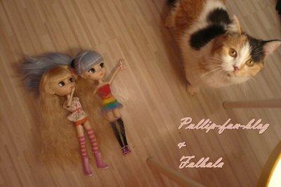 Mes puces et mon chat