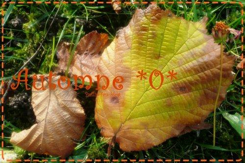 L'automne !
