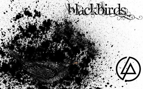 Black birds -