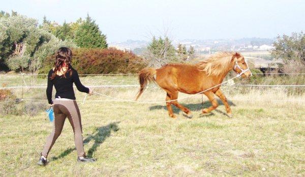 Ma passion, Mon cheval !