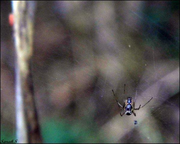 Au fil des araignées :)