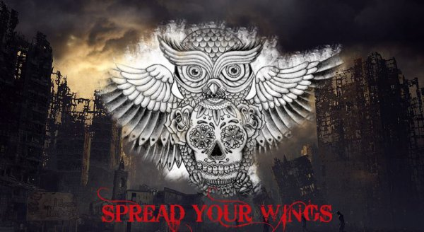 Spread your Wings Band