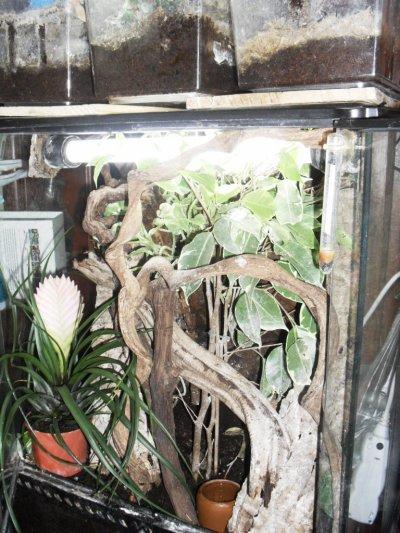 Terrarium de Leïla