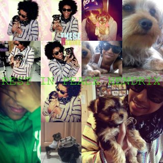 Princeton's dog dead://
