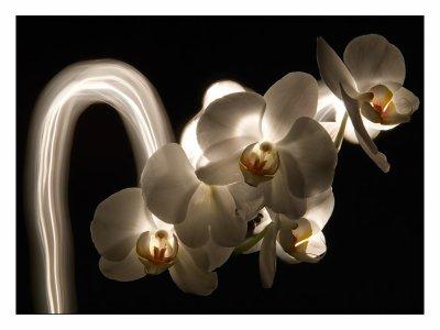 Welcome sur mon blog pour orchidées