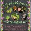 Portes Ouvertes Spécial Orchidées chez Escapade Florale les 22 et 23 Novembre 2014
