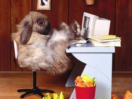mdr le lapin .......<3